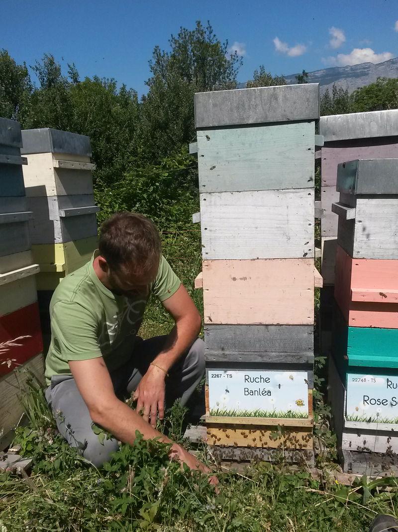 La ruche Banléa