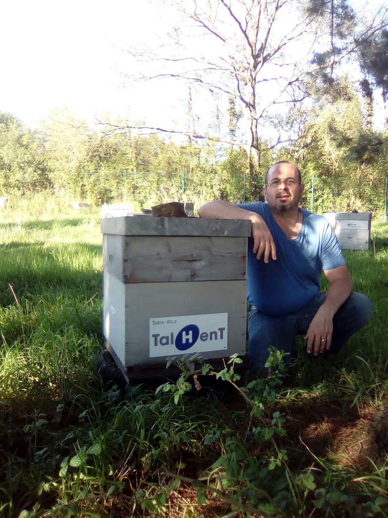 La ruche Talhent