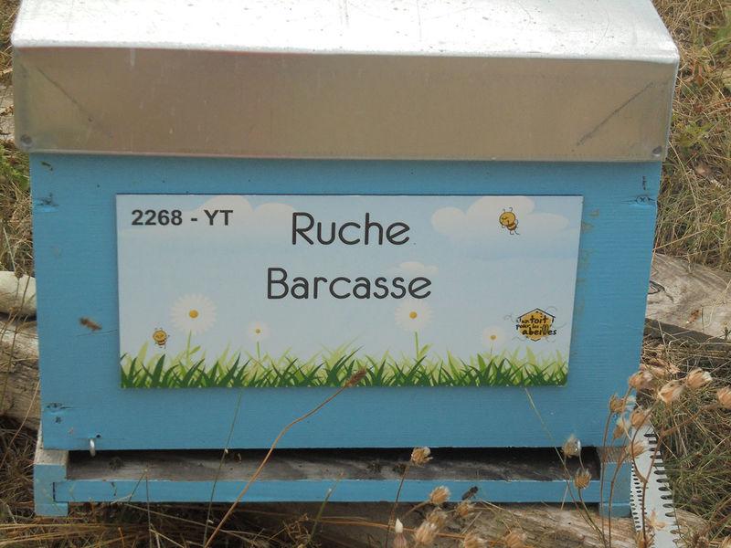 La ruche Barcasse