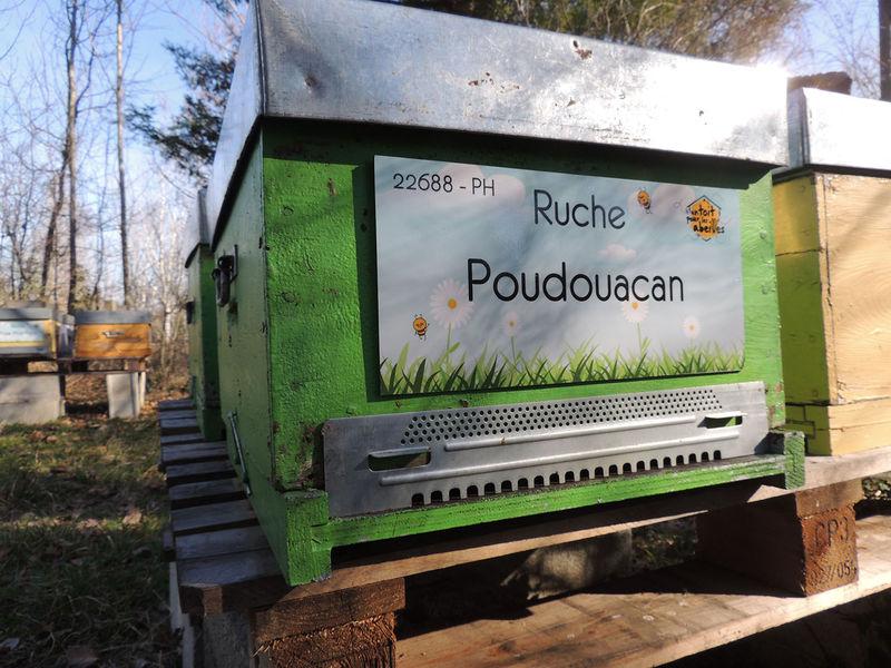 La ruche Poudouacan