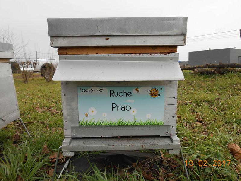 La ruche Prao