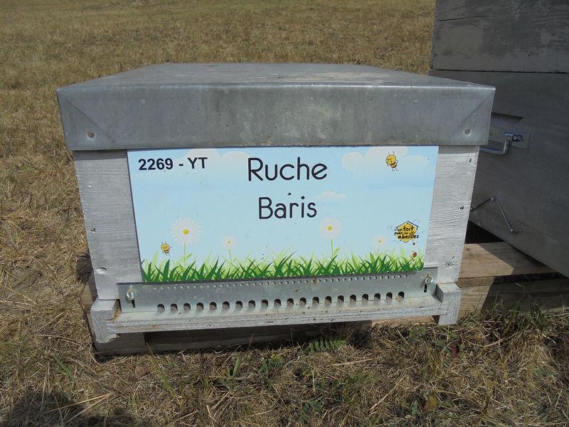 La ruche Baris