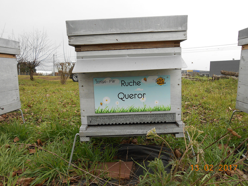 La ruche Queror