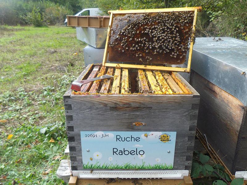 La ruche Rabelo