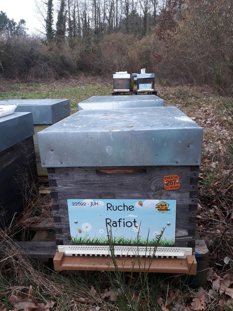 La ruche Rafiot