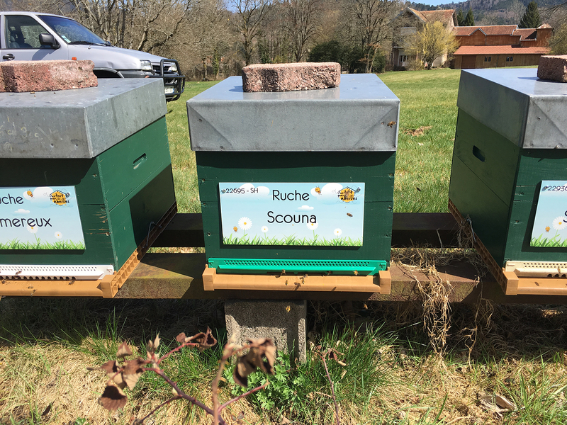 La ruche Scouna