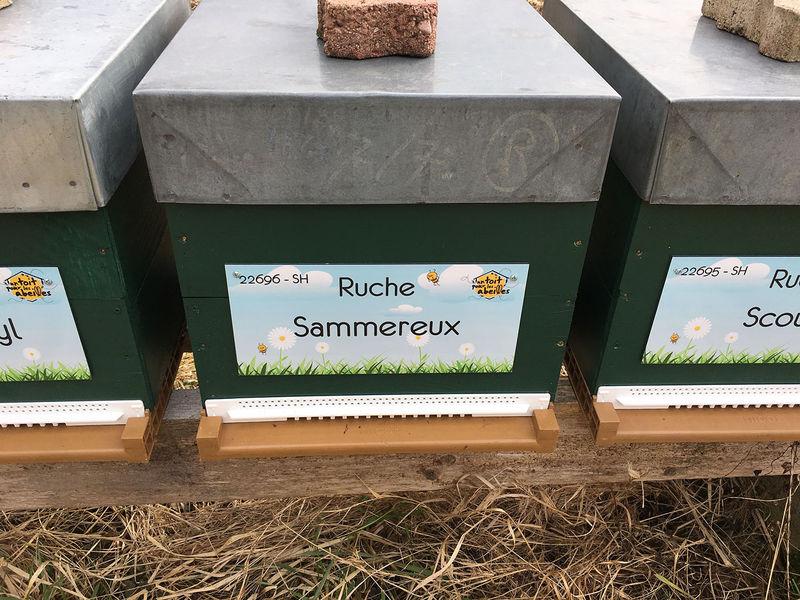 La ruche Sammereux