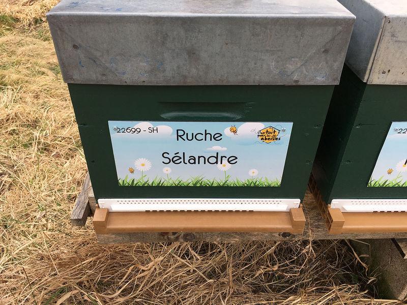 La ruche Sélandre
