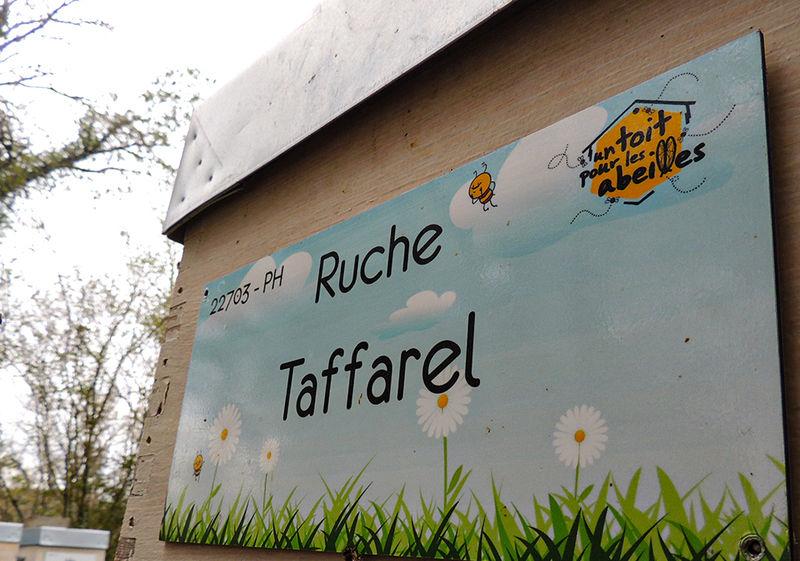La ruche Taffarel