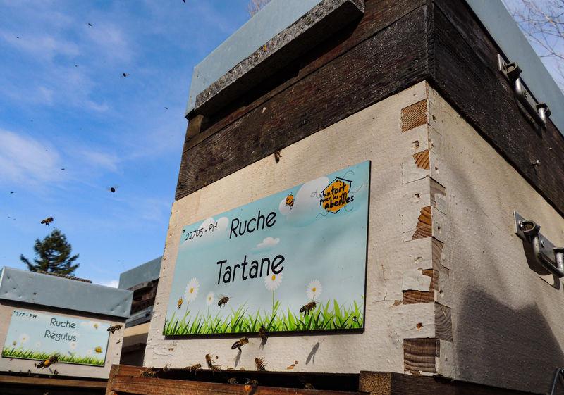 La ruche Tartane
