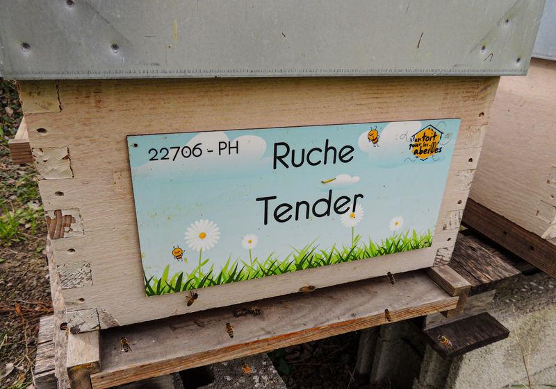 La ruche Tender