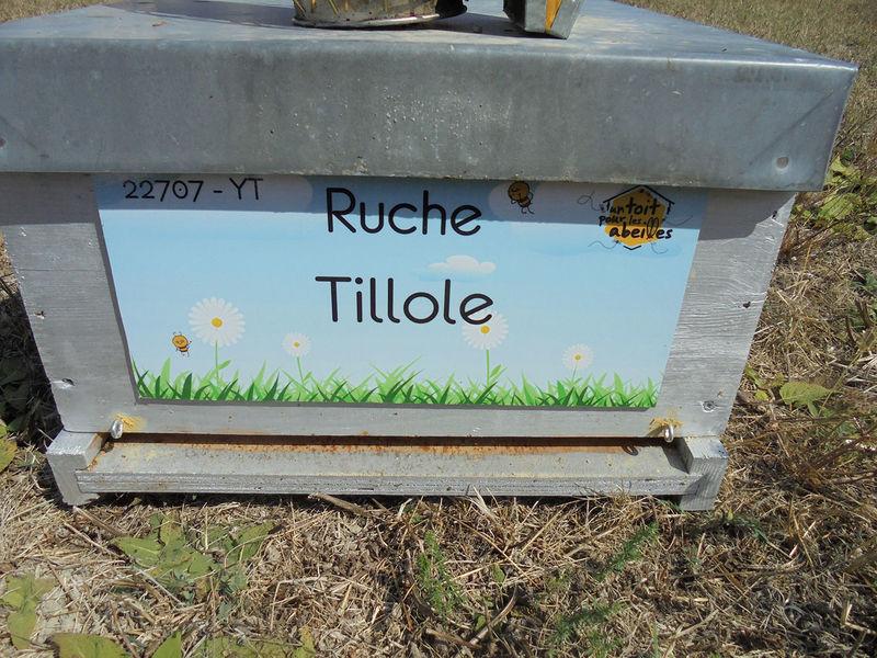 La ruche Tillole