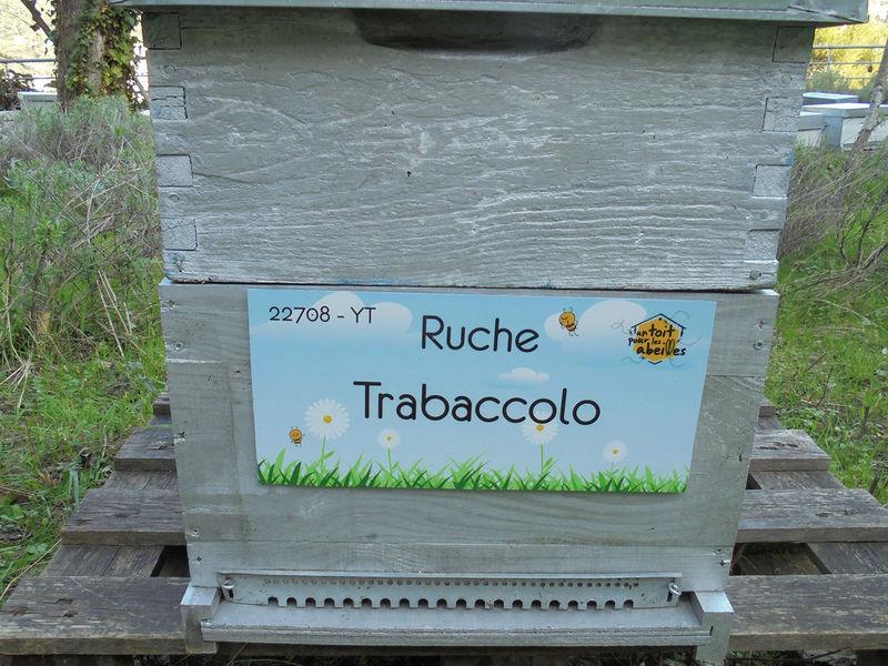 La ruche Trabaccolo