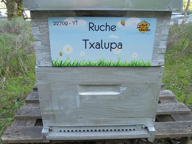 La ruche Txalupa