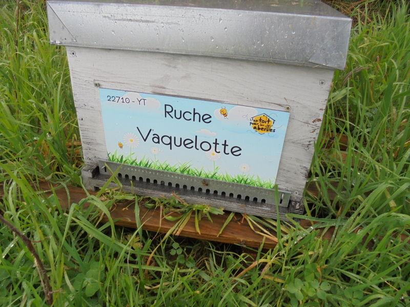 La ruche Vaquelotte