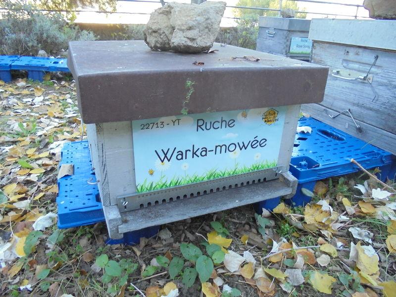 La ruche Warka-mowée