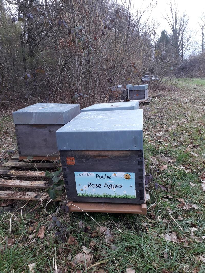 La ruche Rose Agnes