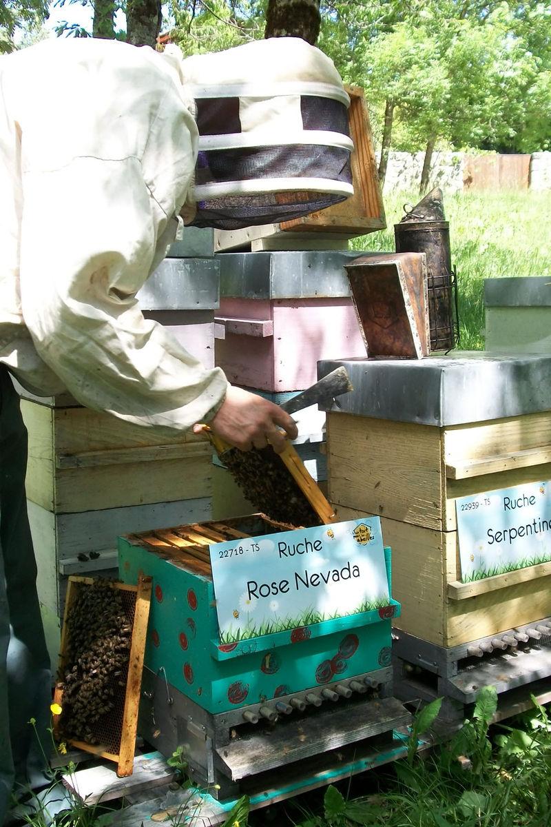 La ruche Rose Nevada