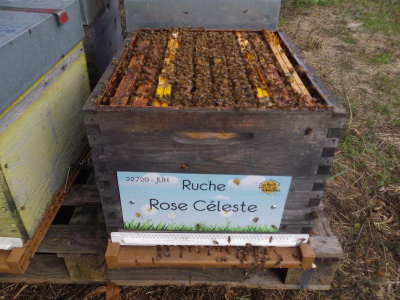 La ruche Rose Céleste