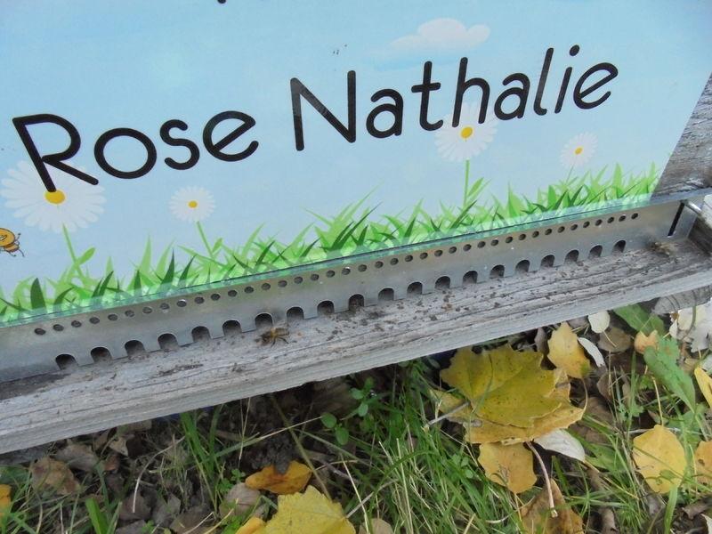 La ruche Rose Nathalie