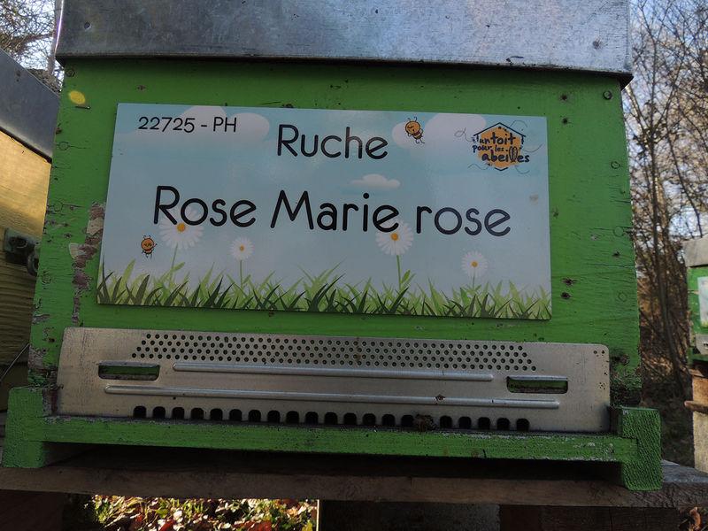 La ruche Rose Marie rose