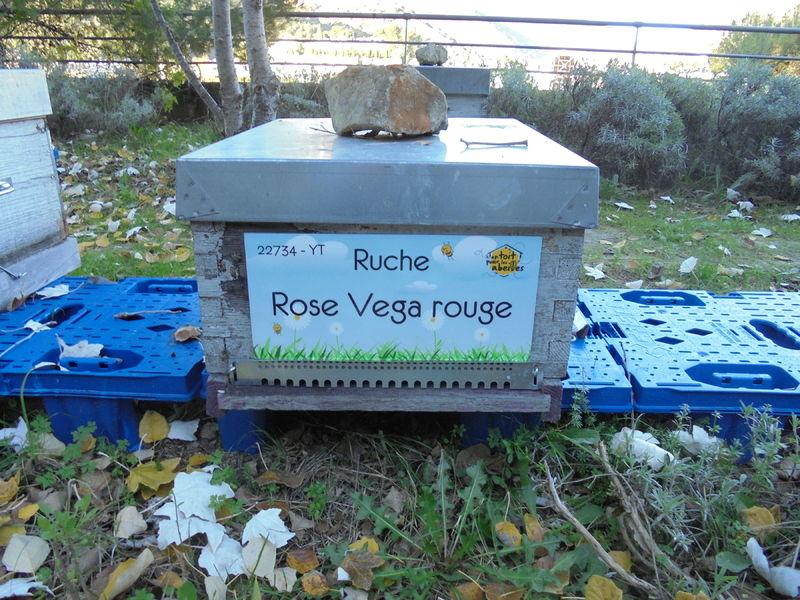 La ruche Rose Vega rouge