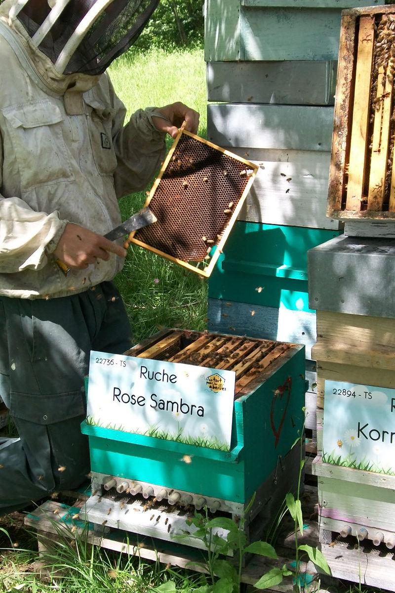La ruche Rose Sambra