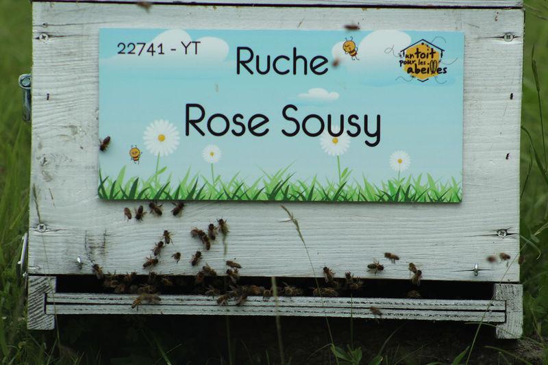 La ruche Rose Sousy