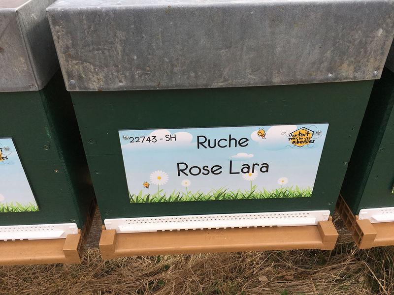 La ruche Rose Lara