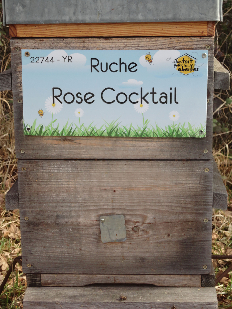 La ruche Rose Cocktail