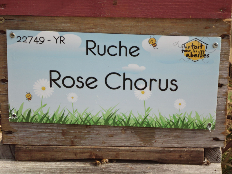 La ruche Rose Chorus