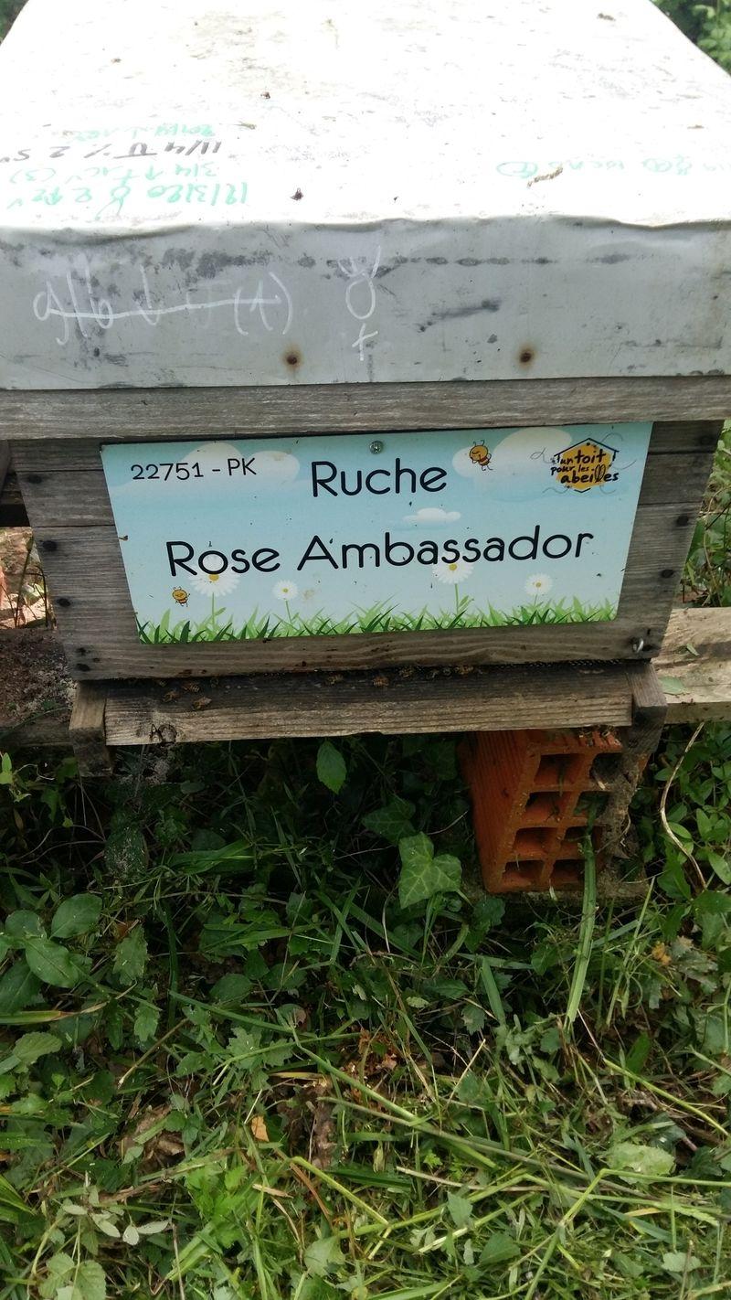 La ruche Rose Ambassador