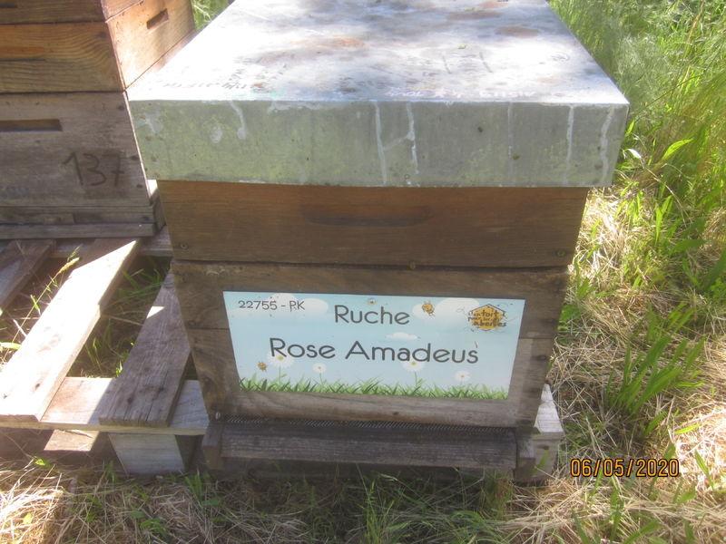 La ruche Rose Amadeus