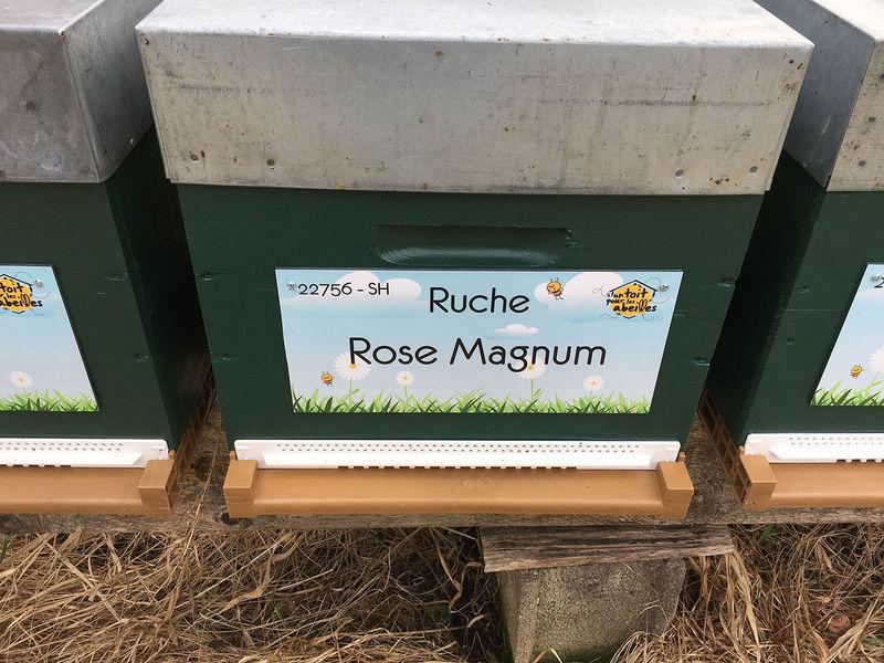 La ruche Rose Magnum