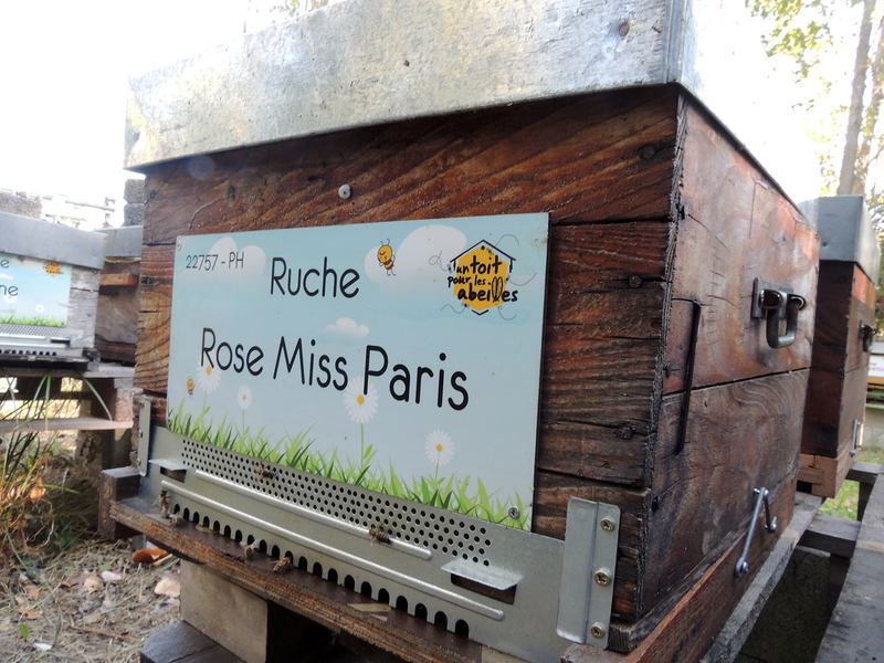 La ruche Rose Miss Paris