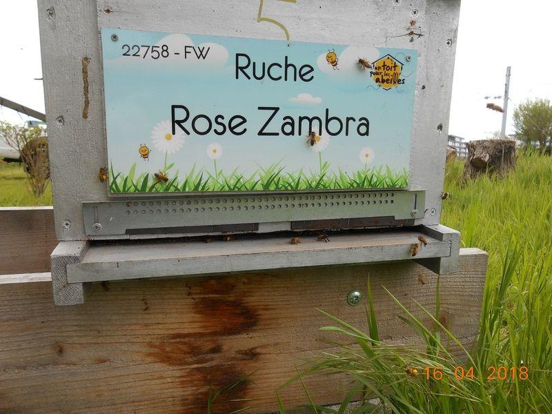 La ruche Rose Zambra