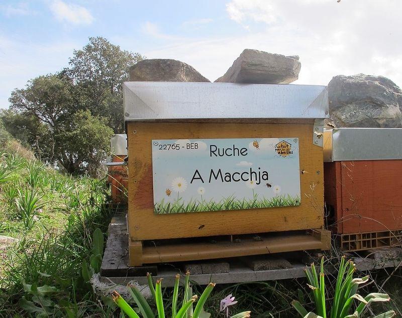 La ruche A Macchja