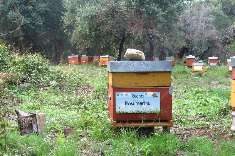 La ruche Rosumarinu
