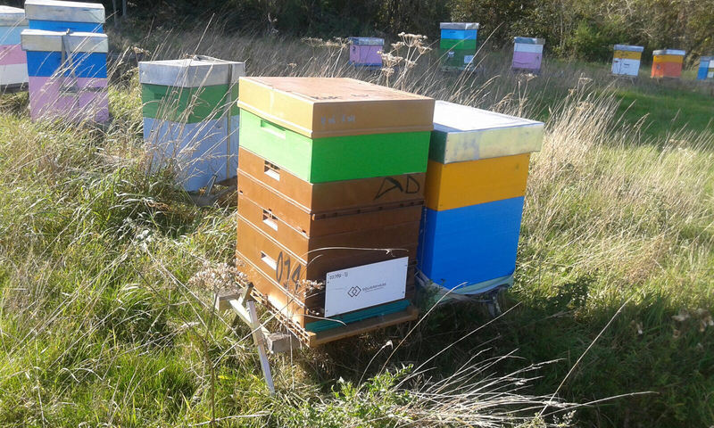 La ruche SQUARENESS