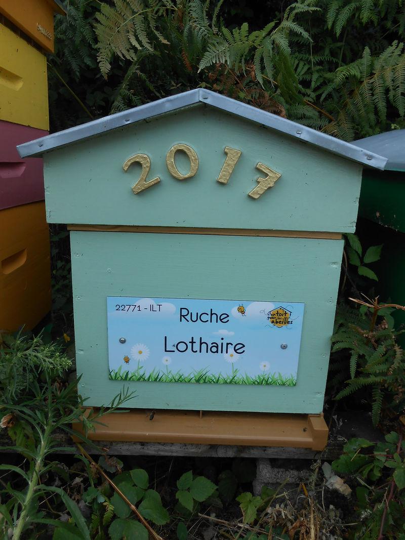 La ruche Lothaire