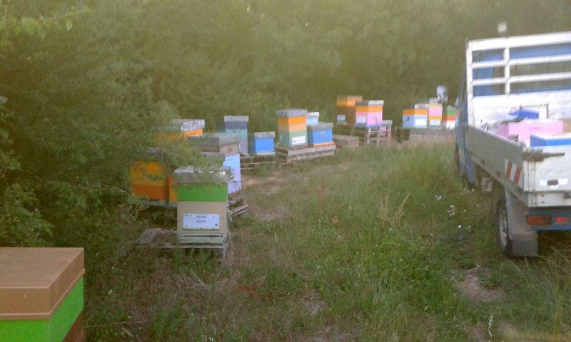 La ruche Tournesol
