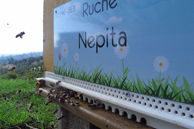 La ruche Nepita
