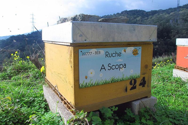 La ruche A Scopa