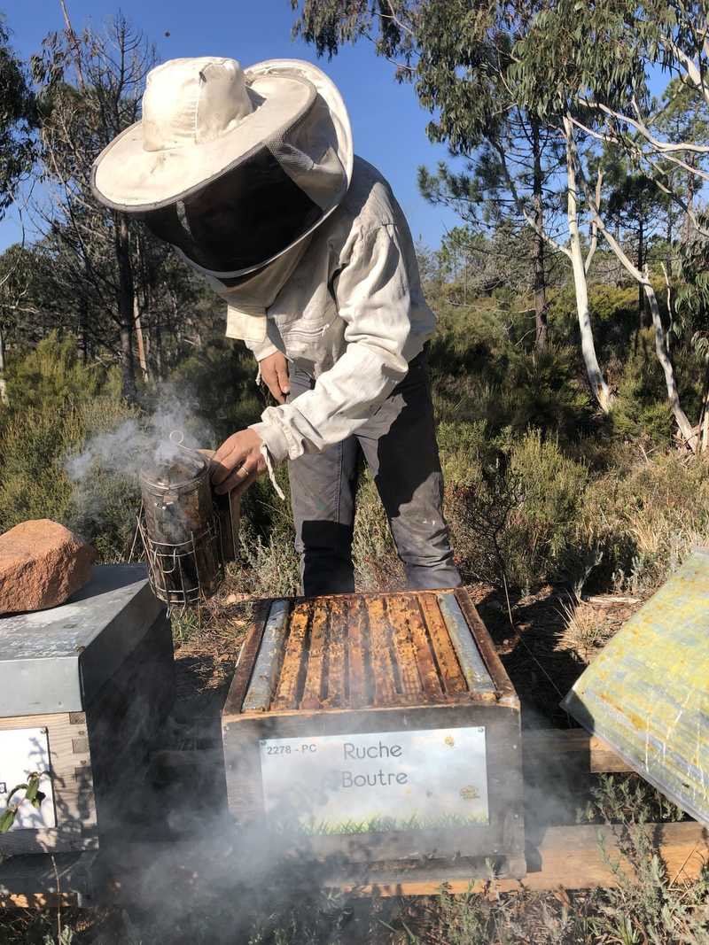 La ruche Boutre
