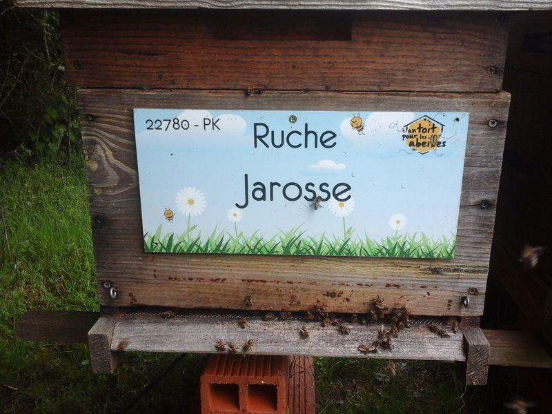 La ruche Jarosse