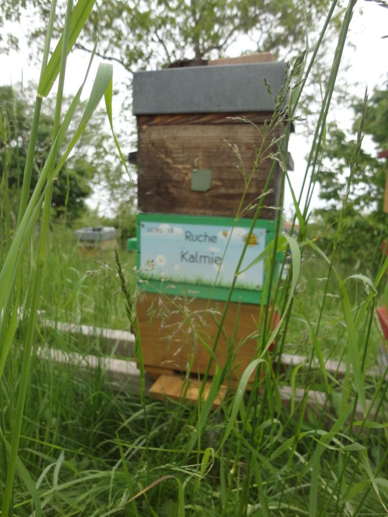 La ruche Kalmie