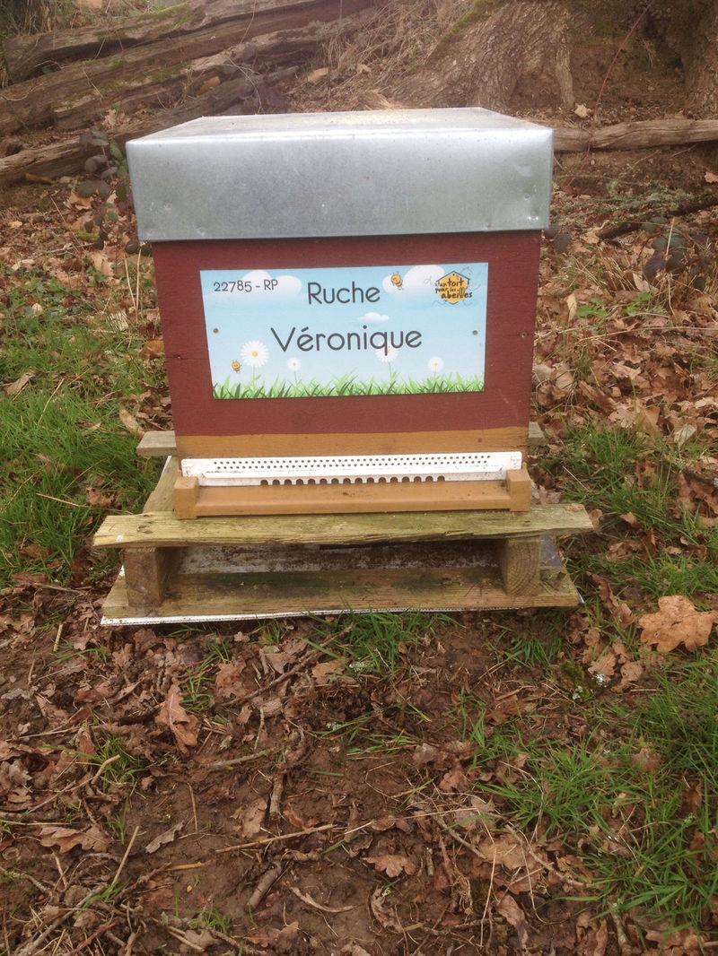 La ruche Véronique