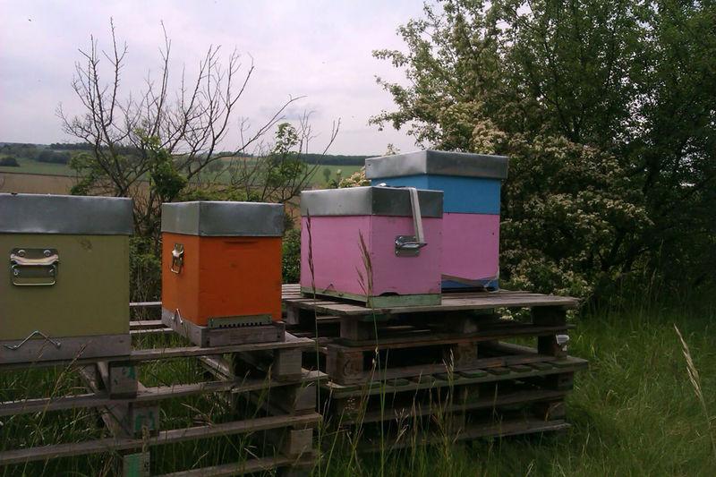 La ruche Epiaire