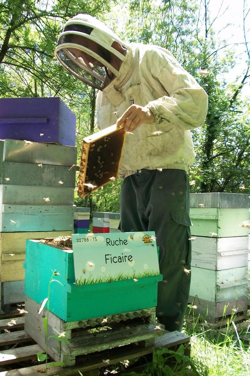 La ruche Ficaire