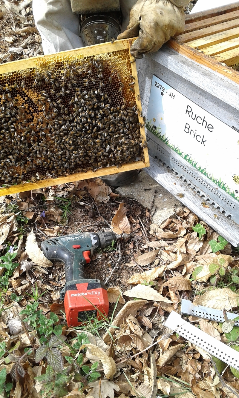 La ruche Brick